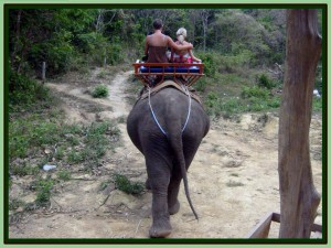 ElephantTrekking